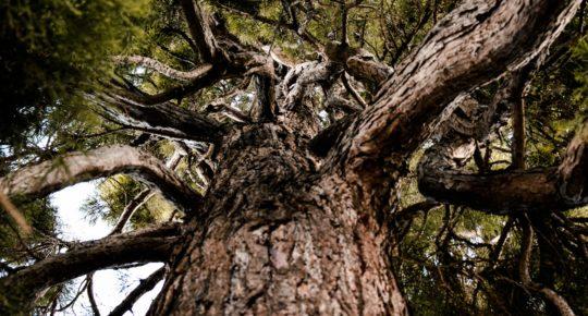Meditando Abajo del Árbol